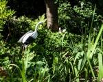 Willa Christo - ogród