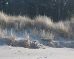 Wydmy i trawy plaży zachodniej.